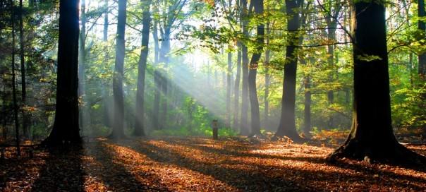 Eine Reise in die Natur. Entspannung und Kraft tanken