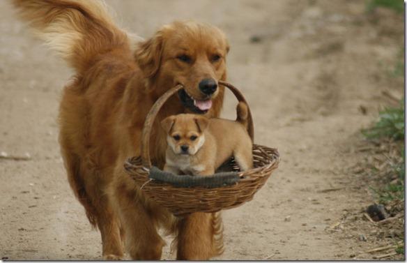 Fit durch den Winter mit Hund