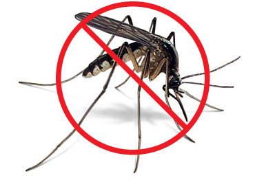 Insekten Stiche und Insektenschutzmittel