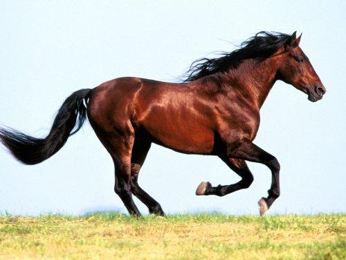 Was ist beim Pferdekauf zu beachten?