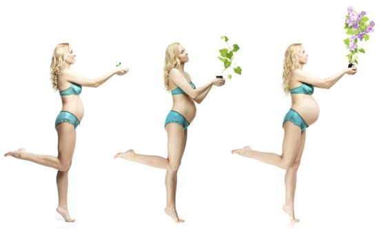 Entwicklung von Mutter und Kind  im ersten Schwangerschaftsdrittel