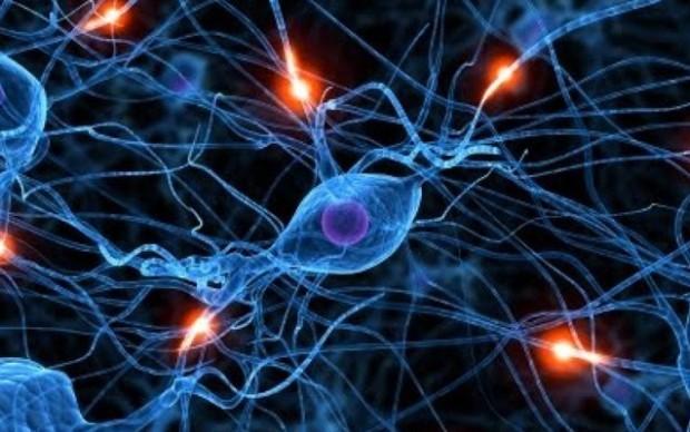 Wie beeinflussen die Hormone unseren Organismus?