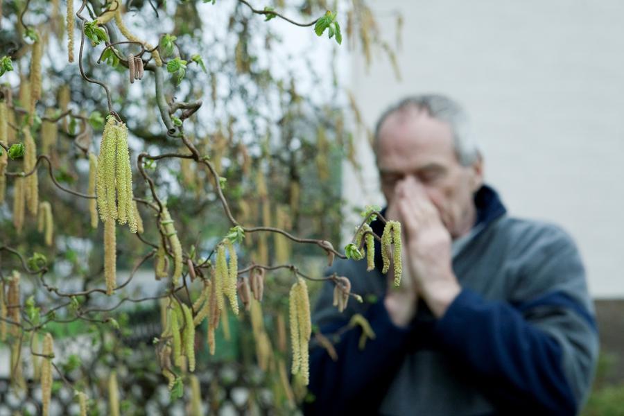 Allergie gegen Birkenpollen