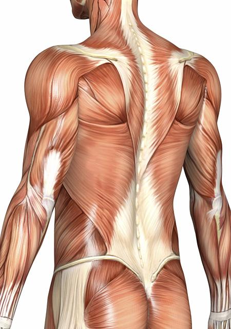 Die besten Tipps für einen starken Rücken