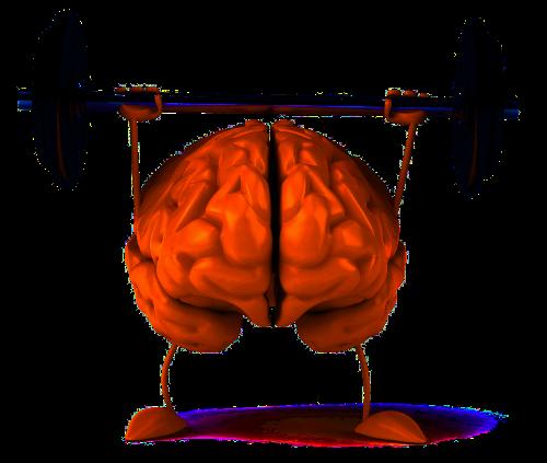 Gehirntraining mit Rosenwurz zusammen hält im Alter jung