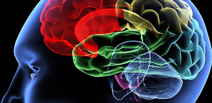 Neuro-Imaging: Anzeichen im Gehirn erkennen