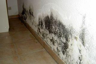 Schimmelpilze in Innenräumen – Gesundheitsgefahr oft unterschaetzt