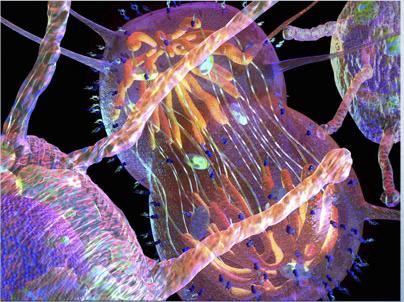 Tumorvakzination - Impfen gegen Krebs