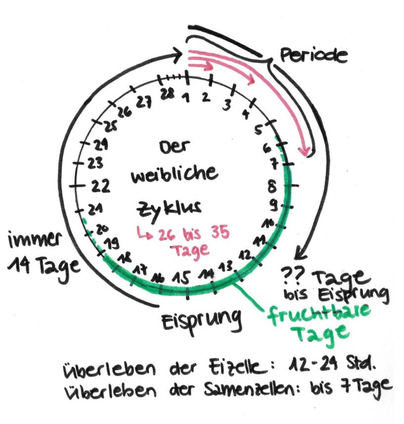 Wie Funktioniert Der Weibliche Zyklus: Berechnung Von Der Weibliche Zyklus Als Natürliche Verhütung