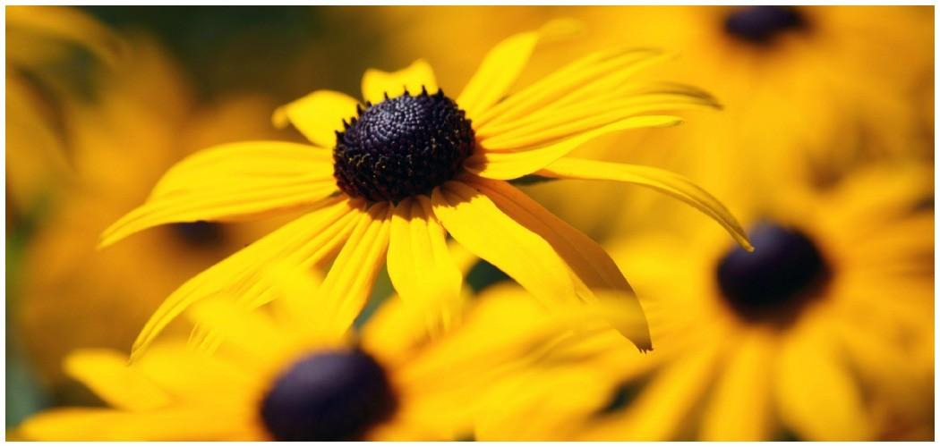 Ratgeber: Biologischer Sonnenschutz